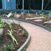 Blackburn House, Grenfell Street, Adelaide Landscaping Project